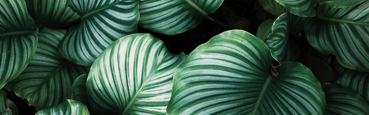 Botanical leaves